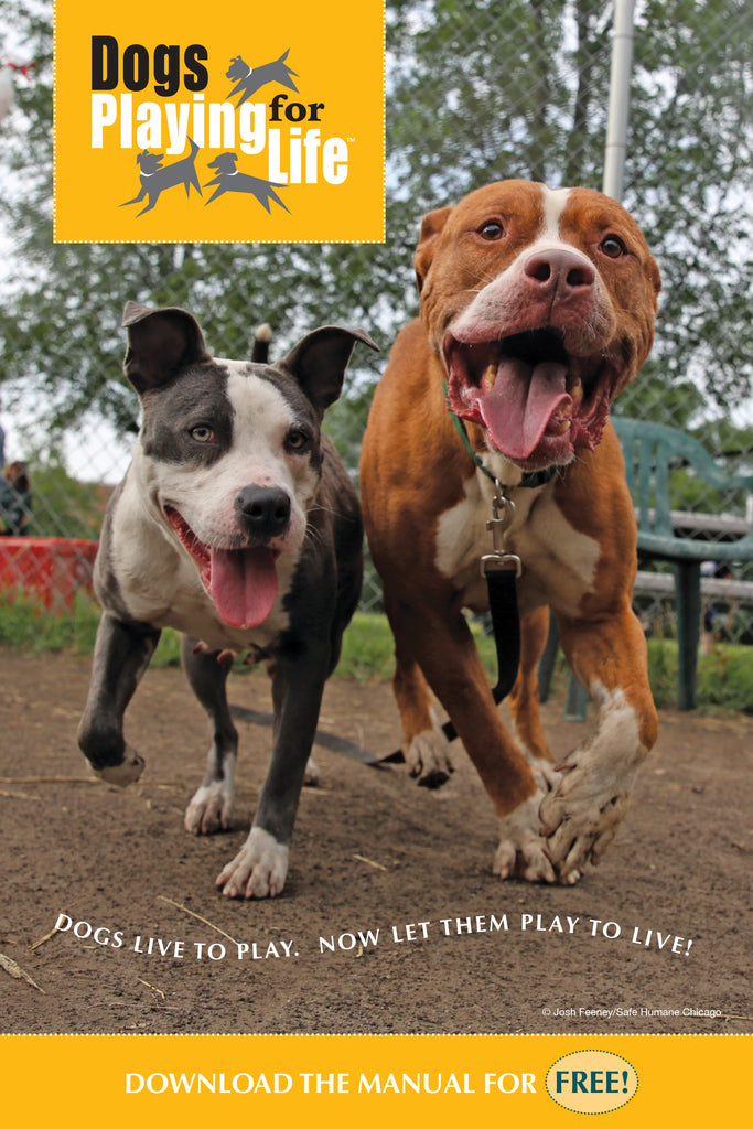 Dogs Playing for Life Playgroup Enrichment Postcard