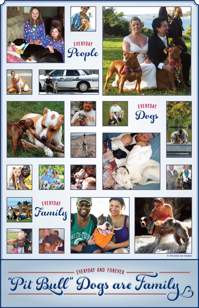 """Pit Bull"" Dogs are Family Postcard"