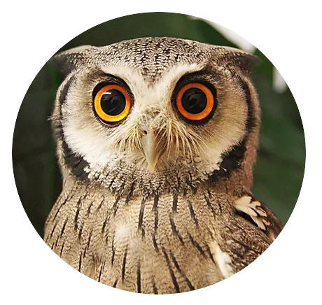 Summer Harry Potter Art Themed 1 Day Course - Includes Owl and Creature Visit to the studio!  Ages 7+ Thursday 20th August 2020