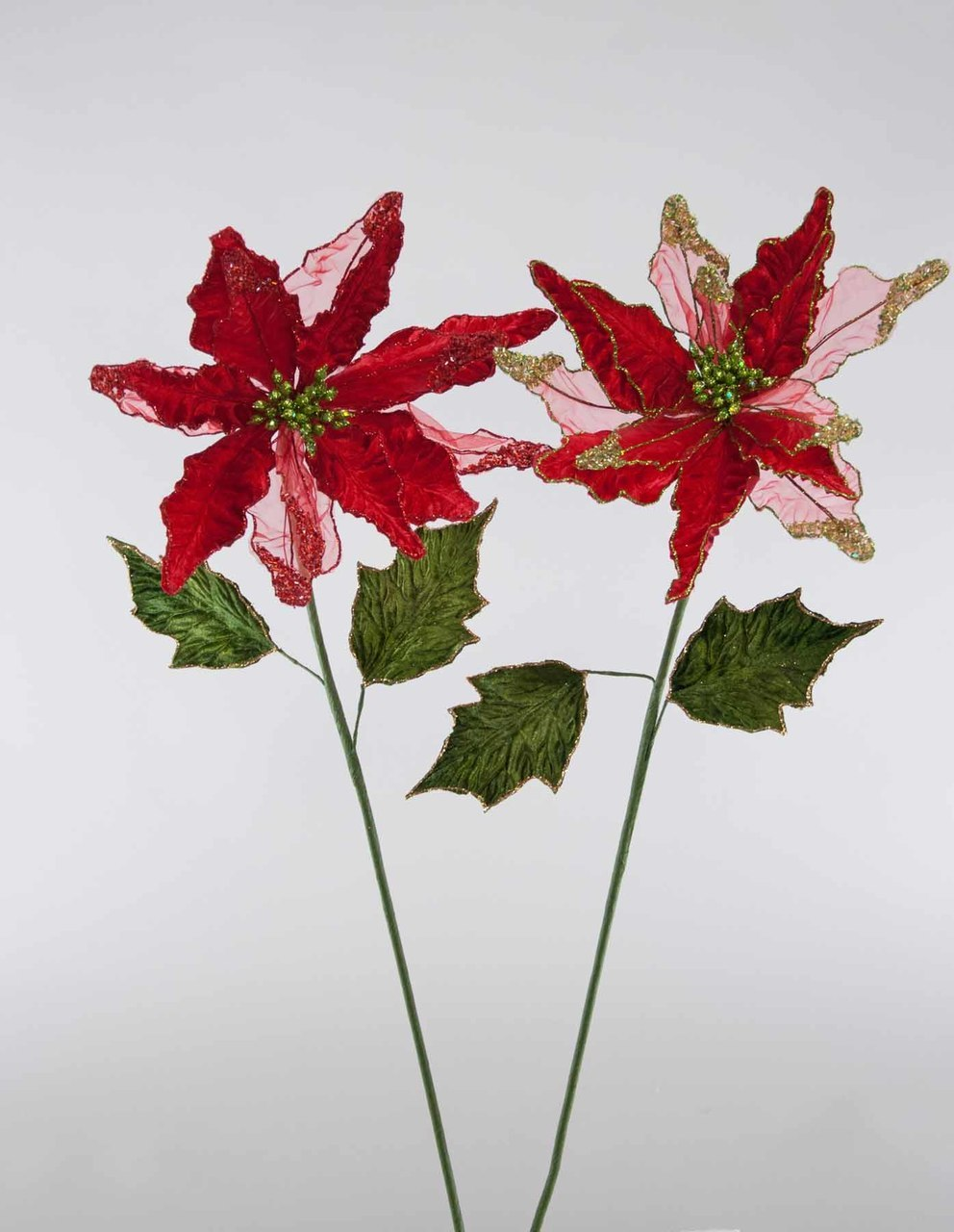Red Sheer/Velvet Poinsettia