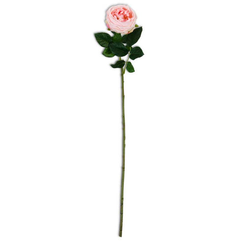24 Inch Real Touch Pink Austin Rose Stem