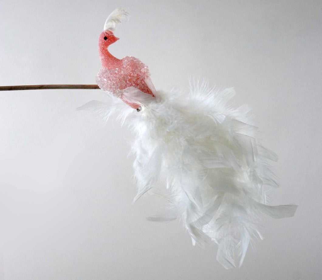 Pink Fifi Peacock With White Tail