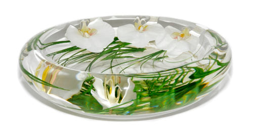 White Phalaenopsis Large Flower Bowl
