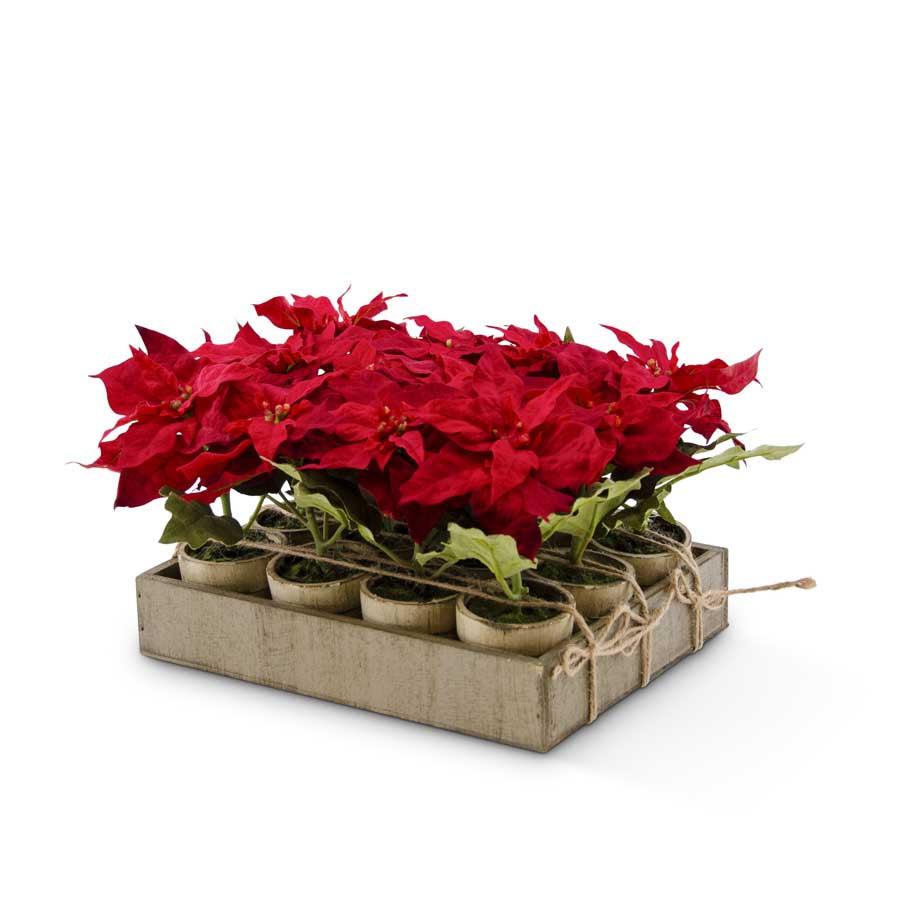 12 Assorted Potted Red Poinsettia w/Wood Tray