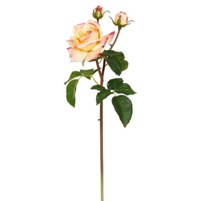 English Rose Tomora 22''