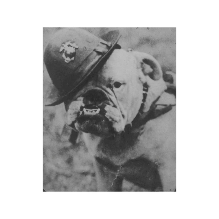 Sergeant Major Jiggs Bulldog T-Shirt