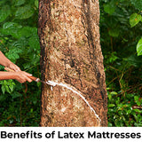 Benefits of Latex Mattresses