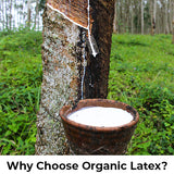 Why Choose Organic Latex?