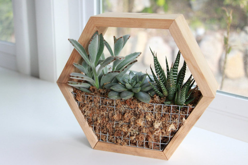 DIY Hexagon Succulent Planter Kit