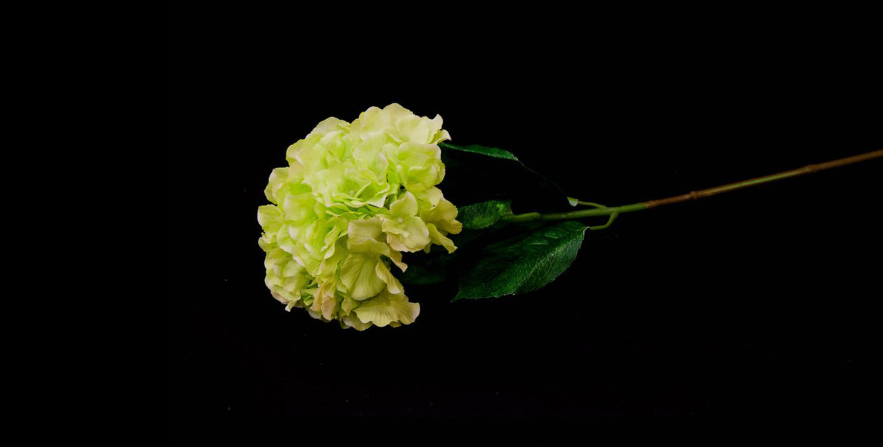 HCFL4741 - Long Stem Green Hydrangea