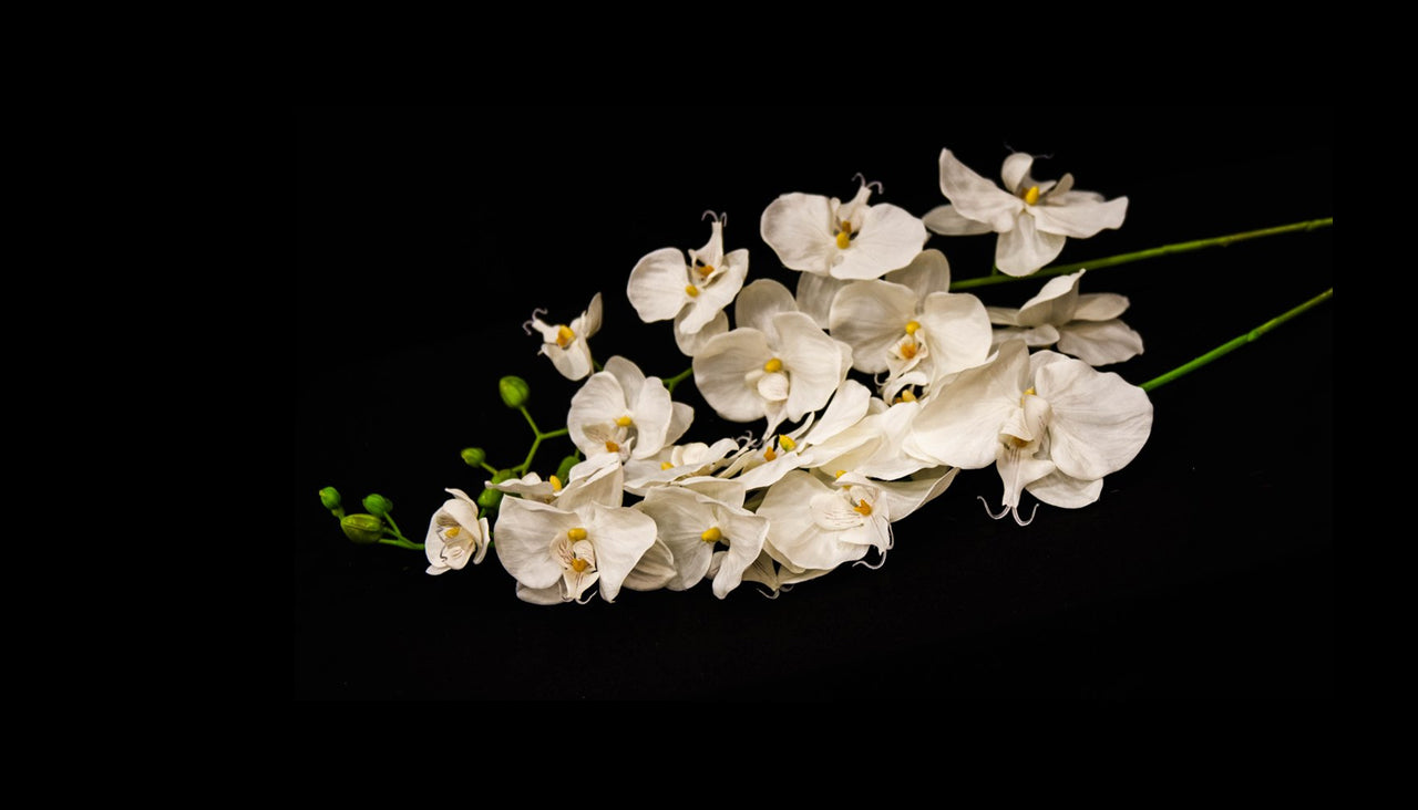 HCFL5294 - White Long Stem Double Orchid