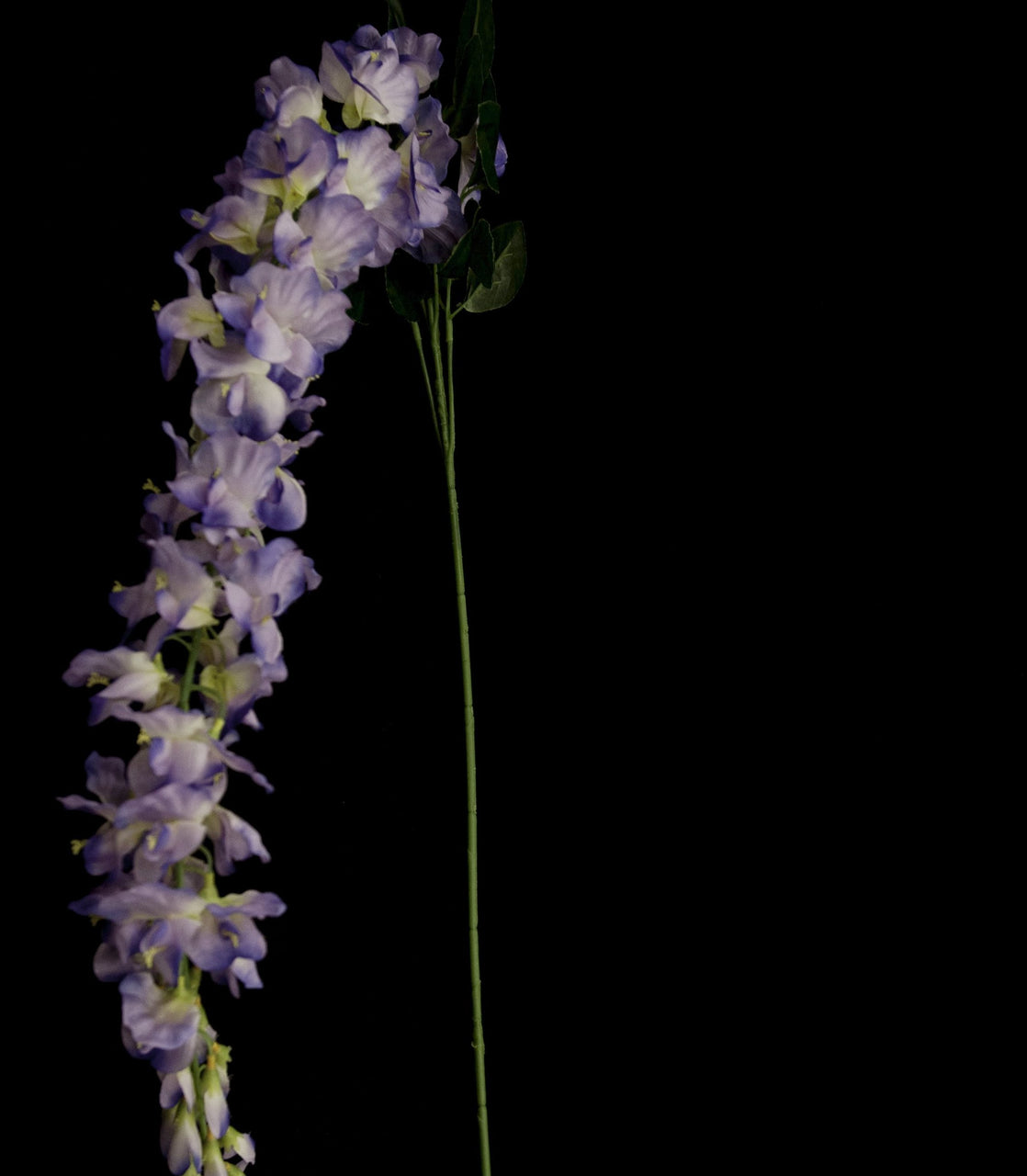 HCFL5309 - Purple Long Stem Wisteria
