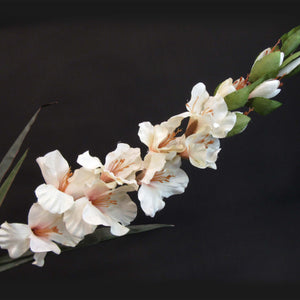 HCFL5844 - Long Stem Cream Gladiola