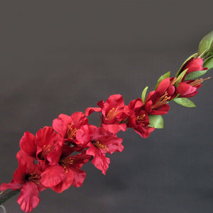 HCFL5845 - Long Stem Burgundy Gladiola
