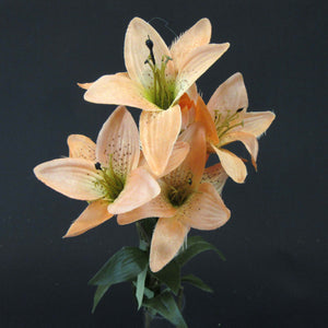 HCFL5857 - Salmon Long Stem S Lily