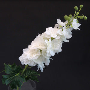 HCFL5858 - White Long Stem Delphinium