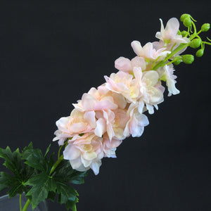 HCFL5859 - Pink Long Stem Delphinium