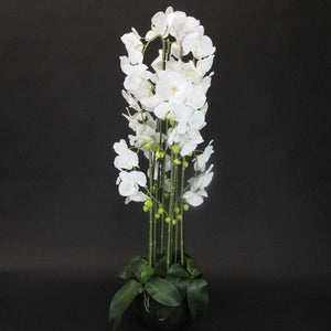 HCFL5928 - White Orchid Plant