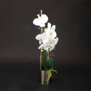HCFL5977 - Potted White Orchid
