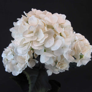 HCFL6000 - Cream Cherry Blossom Hydra Bouquet