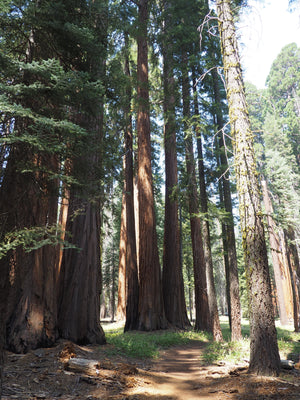A Guide to Camping at Sequoia National Park