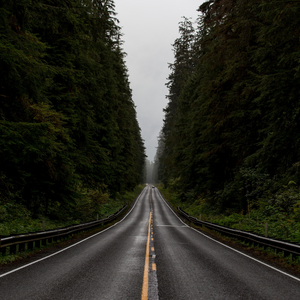 Things You Need to Know before in the Forests of Olympic National Park