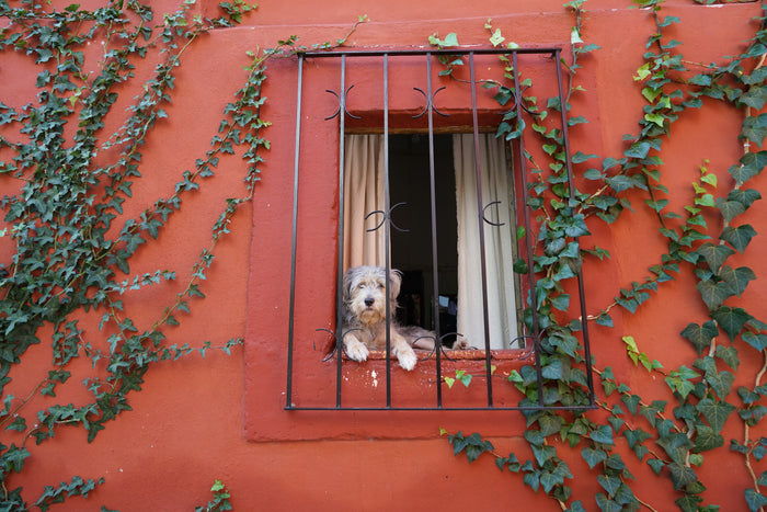 Watching The World Go By (San Miguel de Allende, Mexico, 2019)