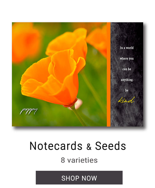Wildflower Notecards & Seeds