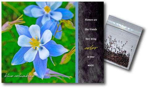 Blue Columbine Notecard & Seeds