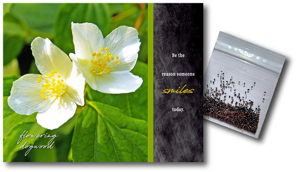 Flowering Dogwood Wildflower Seeds & Notecard