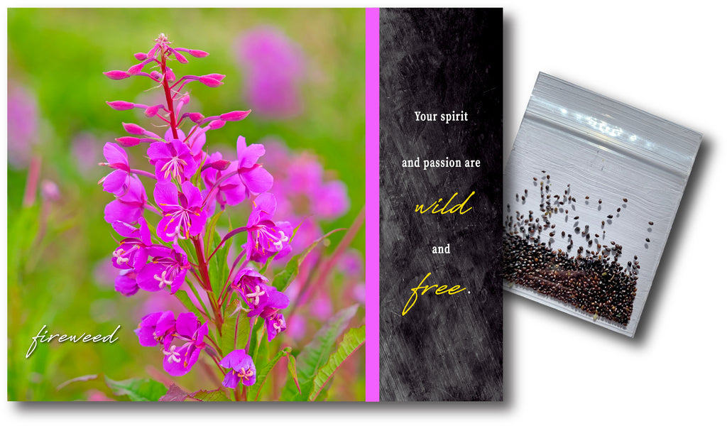 Fireweed Wildflower Seeds & Notecard