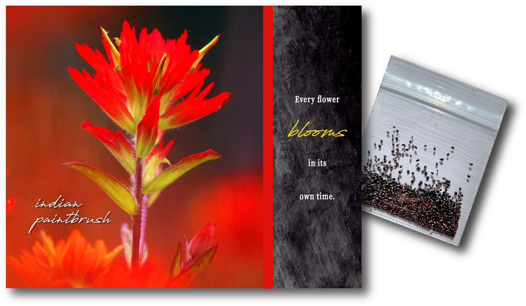 Indian Paintbrush Notecard & Seeds