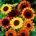 Sunny Sunflowers Seed Mix