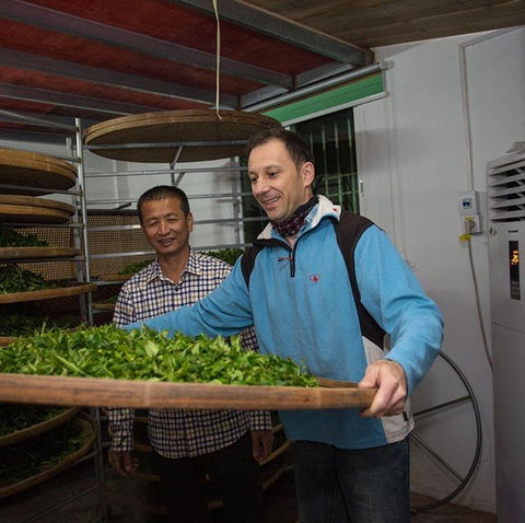 Two men examine a bamboo tray full of tea leaves