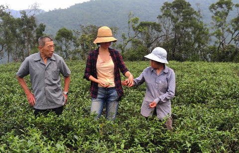 Three tea growers, a man and two women, stand in a tea field