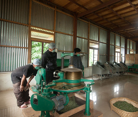 Tea producers working with tea machinery in a factory