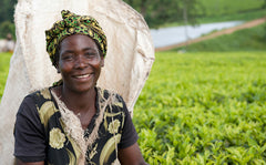 Smiling woman standing in a field of tea plants