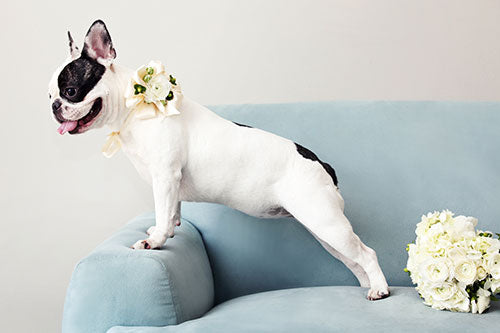 Dog Photography by Araya  Photography