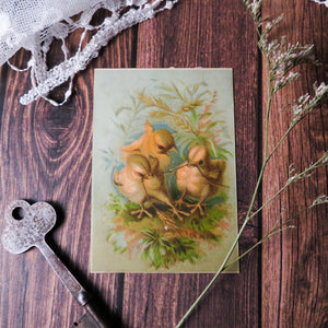 Baby Chicks Victorian Card