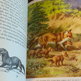 Homes And Habits Of Wild Animals, 1934, Illustrated