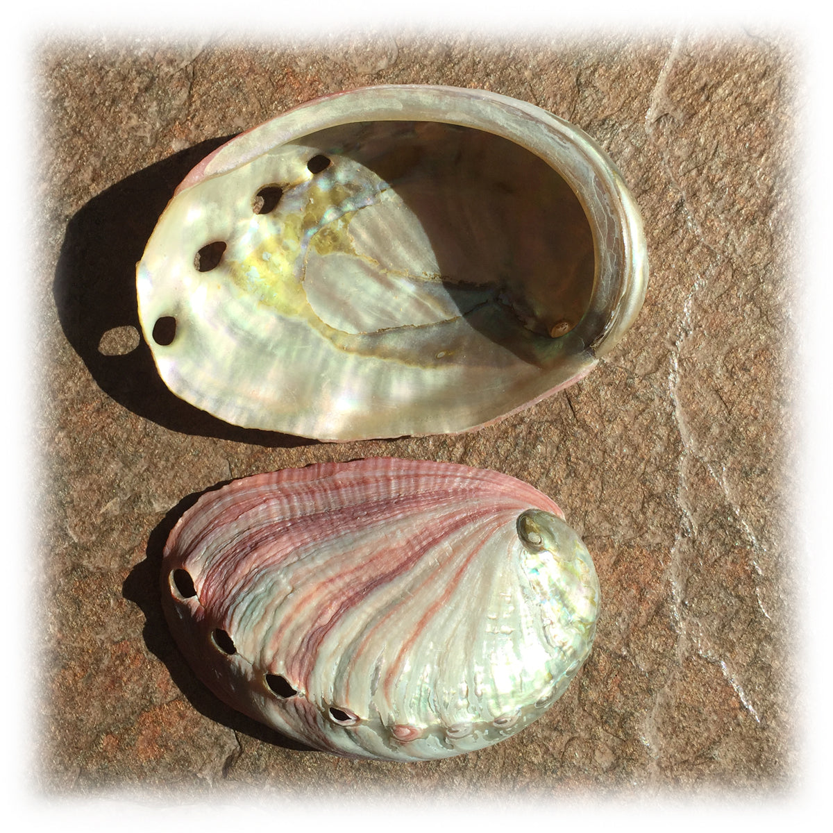 Abalone Shell- small