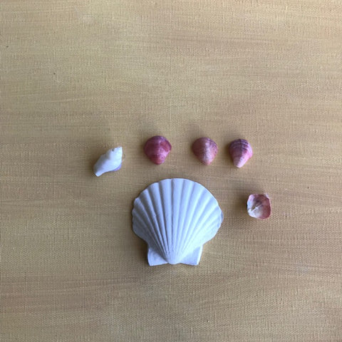 Coastal Classics - CC13 Scallop Shell Small