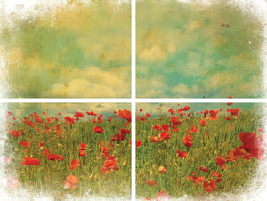 Belles & Whistles Transfer - Field of Flowers