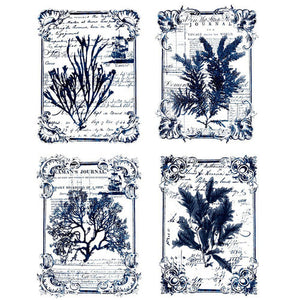 Seaweed Transfer by ReDesign with Prima