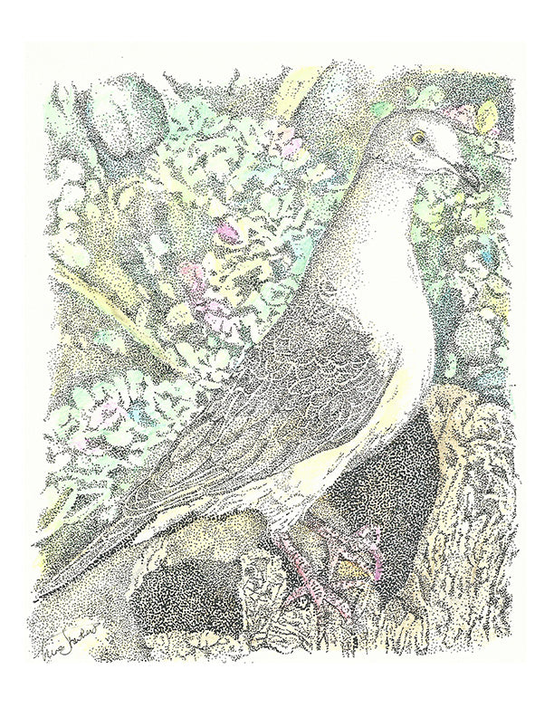 Bird Print - Mourning Dove #018