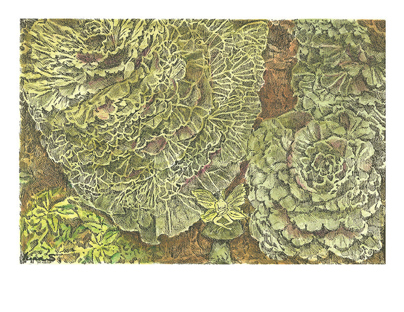 Nature Print - Cabbage Fairy #077