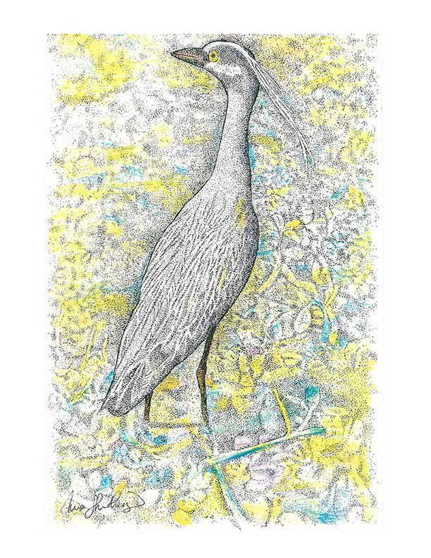 Bird Print - Tri-Color Heron #091