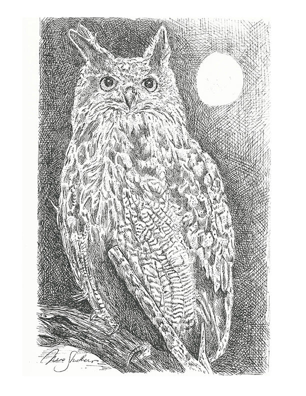 Bird Print - Moonlit Owl #096