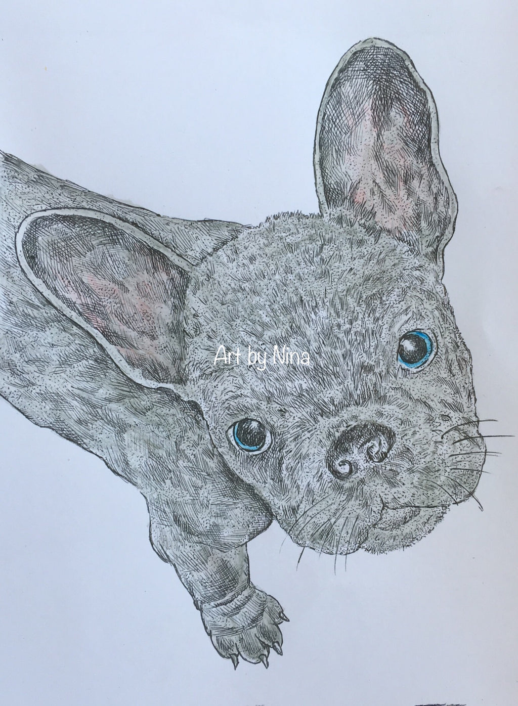 Animal Art - Grey French Bulldog #298