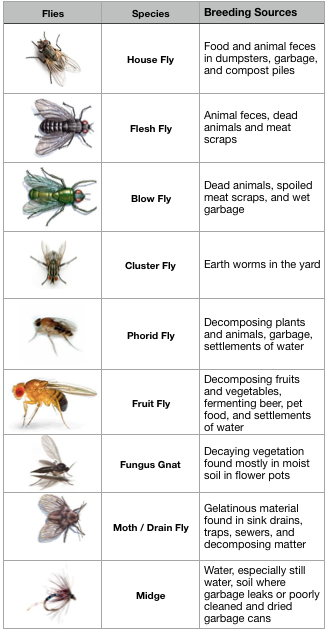 4 Tried and True Natural Ways to Get Rid of Flies in the Home or Outdoors